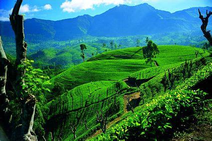 Ceylon Srilanka sri lanka tea plantations export portal