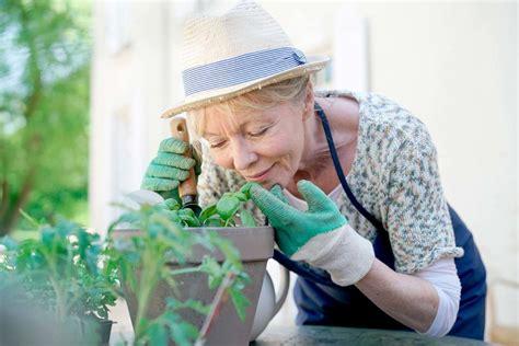 piante aromatiche da giardino piante aromatiche da giardino idee e soluzioni estetiche