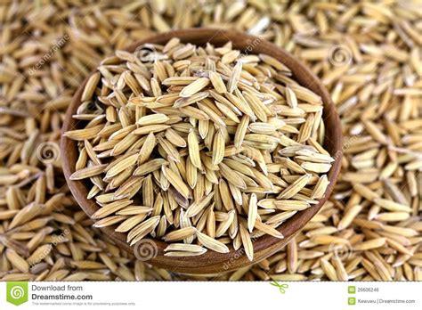 Unpolised Rice With Lotus Seed organic unhusked asian rice royalty free stock image image 26606246