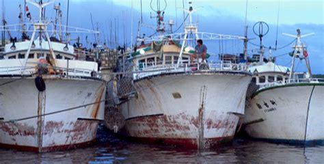 longline boats for sale australia shark mountain the problem with a good catch effects of