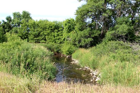 on the banks of plum creek back yard biology