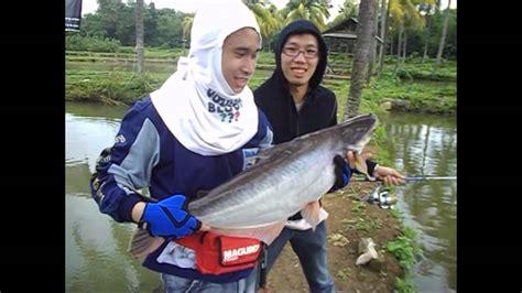 Alat Pancing Ikan Air Tawar umpan pancing ikan patin air tawar terbaik