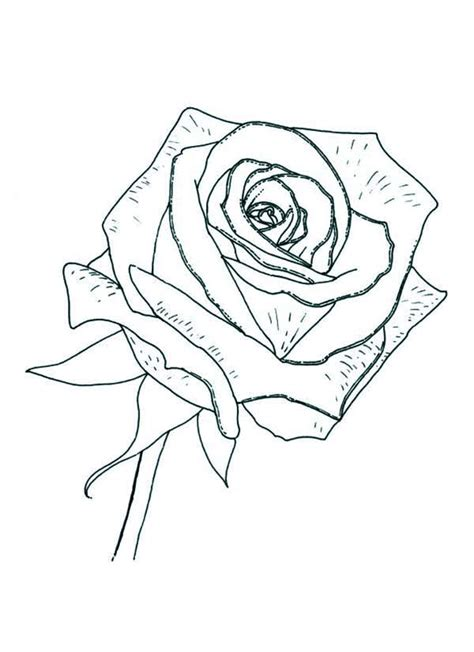 great print rose coloring page in full size with rose