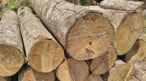 Minyak Kayu Putih Mentah kayu jati sengon accasia lainnya tersedia disini potp