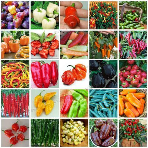 buy  pepper seeds fast growing diy