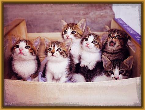 imagenes gatitos hermosos imagenes gatitos tiernos para facebook archivos gatitos
