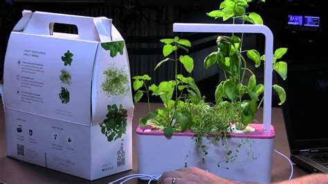 click and grow smart herb garden w l 3 refills basil click and grow smart herb garden review youtube