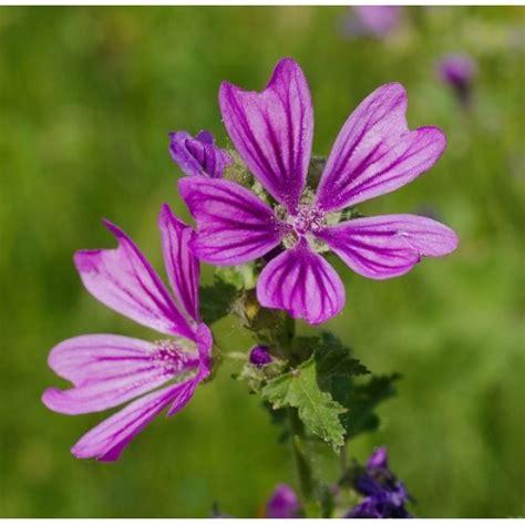 cento fiori ricerca dietasana l erboristeria a bologna