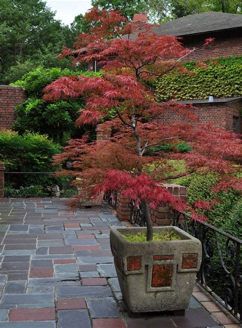 potted trees for patio 11 most essential container garden design tips designing a container garden balcony garden web