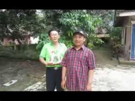 Pupuk Cair Grow More mangga tamiyang dengan aplikasi di grow hbg anarita hp