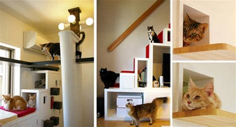 houses designed for cats lovely cat house a playground for cat design swan