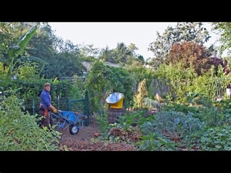 forest backyard backyard food forest tour year 4 youtube