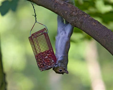 is your wild birdseed disappearing too fast try a