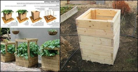 how to build a spud box and grow potatoes in four square