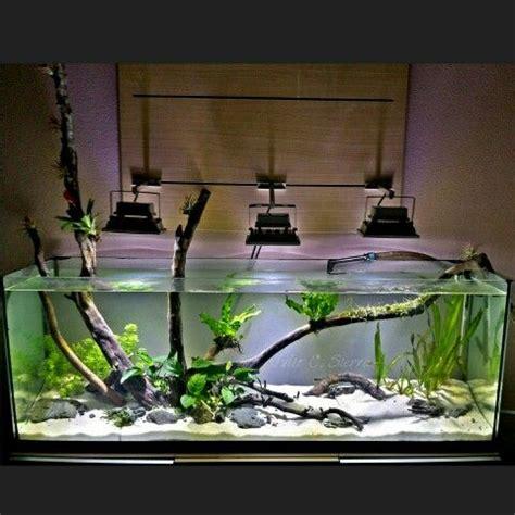images  aquascape  pinterest plants