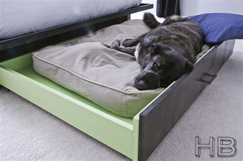 dog platform bed trundle dog bed animals pinterest sleep diy