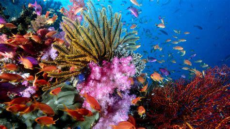 colorful ocean wallpaper download wallpaper 1920x1080 colorful sea fish full hd