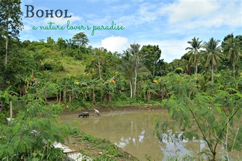 Boho L by A Travel Guide To Bohol Island Philippines