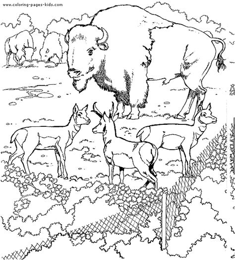 wildlife coloring pages buffalo color page