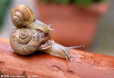 imagenes de animales faras 两只蜗牛摄影图 昆虫 生物世界 摄影图库 昵图网nipic com