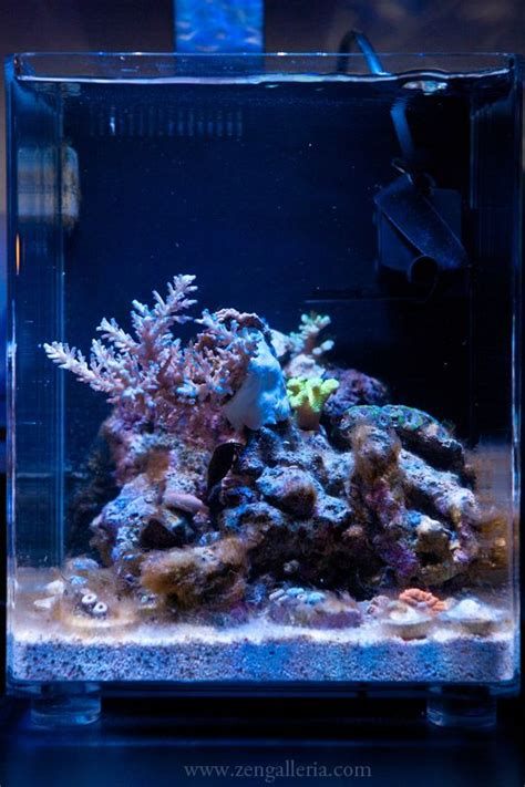 pico reef led lighting 268 best ideas about nano reef aquariums on