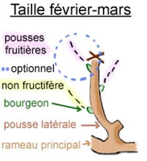 Comment Tailler Une Treille by Entretien Et Taille De La Vigne Gamm Vert