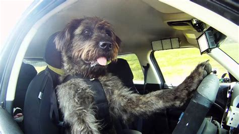 driving dogs meet monty the world s driving