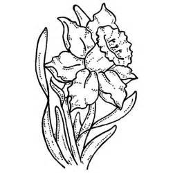 Daffodil Flower Outline by Daffodil Drawing Clipart Best