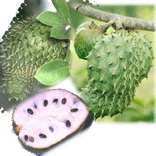 Obat Alami Pembunuh Jamur buah sirsak pembunuh kanker inilah pangansehati s weblog