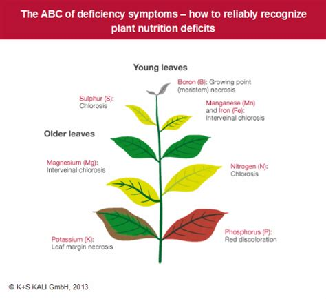 nutrient deficiency image gallery nutrient toxicity in plants