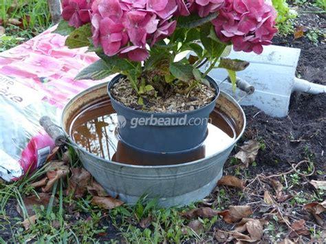 Quand Planter Les Hortensias by Quand Planter Hortensia En Pleine Terre