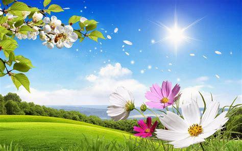 hele mooi bloemen 40 prachtige zomer achtergronden achtergronden