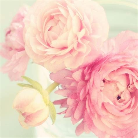 light pink peony quotes