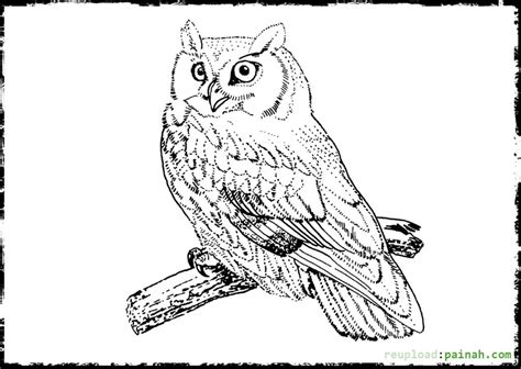 realistic duck coloring page realistic bird coloring pages owl coloring pages