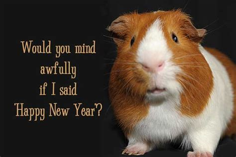 new year for the pig scotland s hogmanay for new year s cheer quillcards