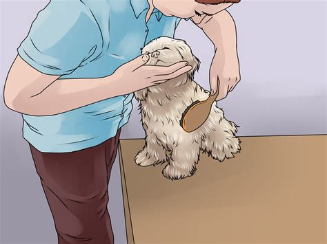 how to bathe a shih tzu 3 ways to bathe a shih tzu wikihow