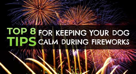 how to calm dogs during fireworks 8 ways to calm your during fireworks higherwell farm