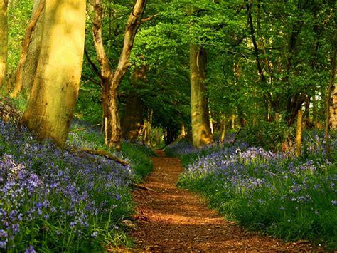 imagenes de paisajes naturales bosques im 225 genes de bosques fondos de paisajes