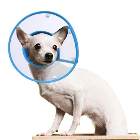 comfort cone for dogs dog cone buster collars inflatable collars and comfy