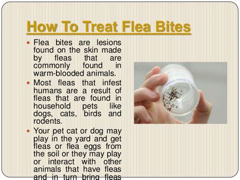 how to care for human flea bites