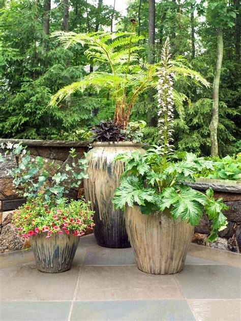 29 best images about patio pot plants on pinterest gardens persian and planters