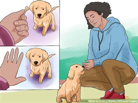 how to house a golden retriever puppy 6 ways to a golden retriever puppy wikihow