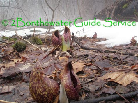 bonthewater guide service  fishing reports page