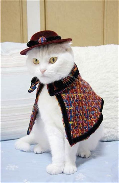 Fashion Cats fashion cats takako iwasa 9781576875575 books