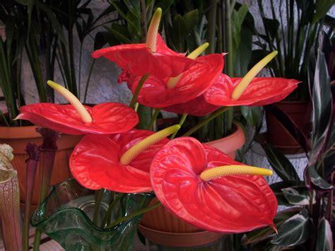 fumagalli fiori fumagalli fioraio allestimenti floreali milanomia