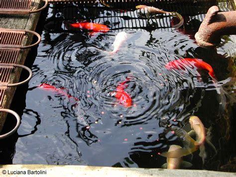 vasca per pesci vasca per pesci all aperto