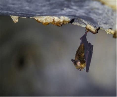 cc dallas bat removal apr