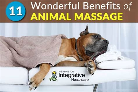 benefits  animal massage dog clinic massage dog