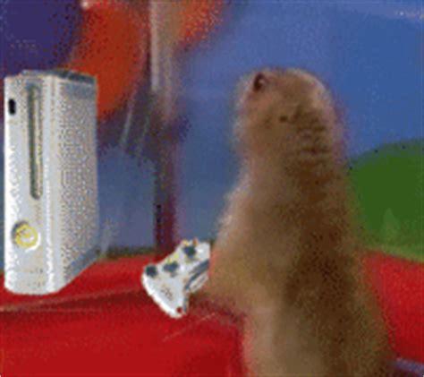 Dramatic Squirrel Meme - dramatic chipmunk meme