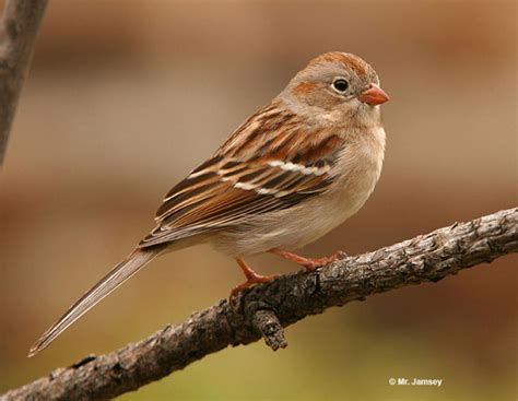 Games To Play In The Backyard Field Sparrow